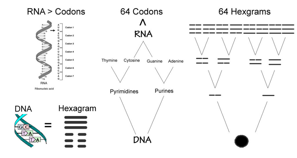 I Ching DNA relationship picture